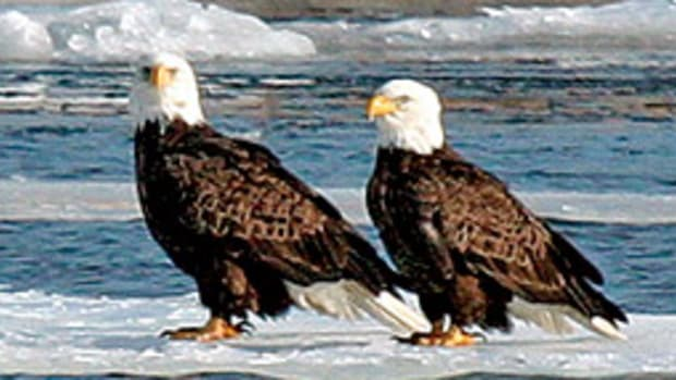 EagleWatch 2009 offers boat tours that bring you closer to the national bird.