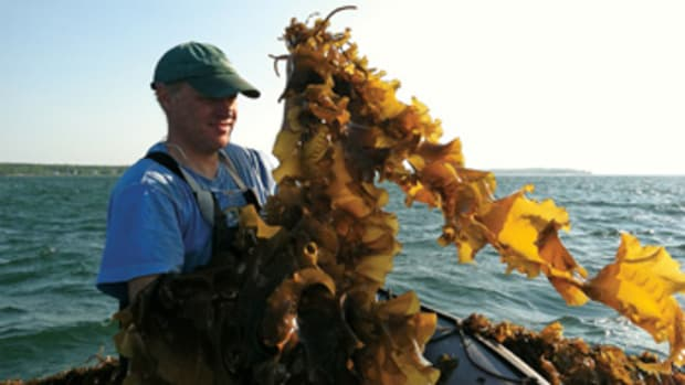 Paul Dobbins works the spring harvest in Casco Bay, Maine.