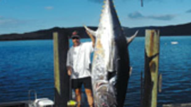 Nathan Adams landed the Pacific bluefin tuna off New Zealand's North Island.