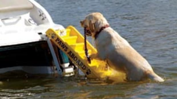 Paws Aboard's Doggy Boarding Ladder