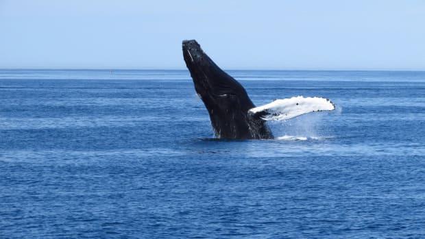 Whale-Web