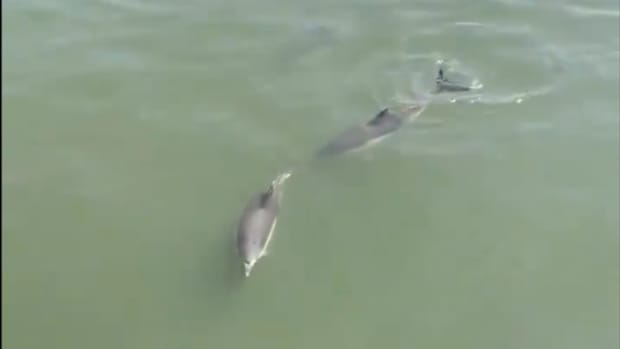 dolphins___23161916977
