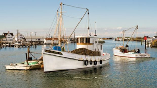 The buyboat Delvin K out of Crisfield, Maryland, takes on oysters from tong boats. The oysters are then taken to processing facilities for shucking and packing.