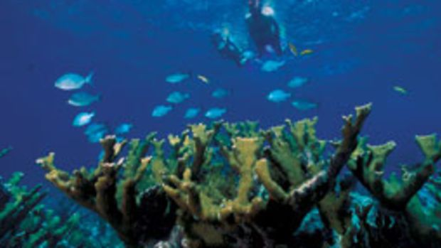 The National Park Service wants to protect corals in Biscayne Bay National Park by creating a 10,522-acre reserve.