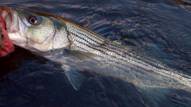 fishing_notes