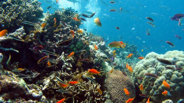 1.2.corals.artur.ling