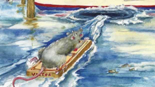 """""""They"""" say it's bad luck if rats jump off your boat. Tom begs to differ."""
