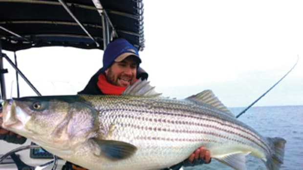 Trophy striped bass — many 40 to 50 inches in length and weighing as much as 45 to 50 pounds — are the target during the spring in Maryland and Virginia.