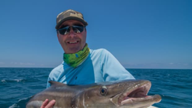 This big cobia, a fish known for its fight, took a fly.