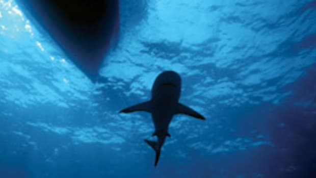 Misunderstood? Maybe, but the sight of a shark is a source of primal fear in humans.