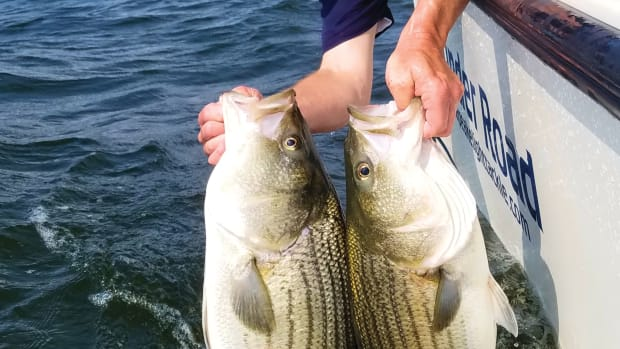 Chesapeake Light Tackle author Shawn Kimbro with a summer striped bass double- header photo