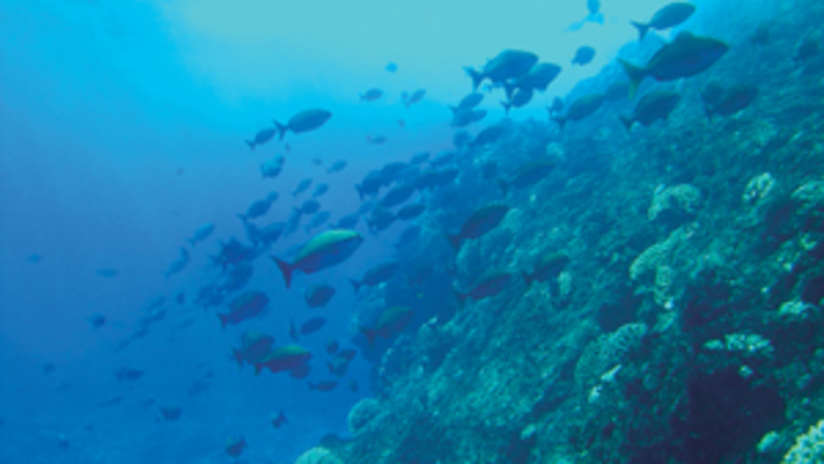 The Pitcairn reserve is home to nearly 1,249 species of marine life, including 365 fish species.