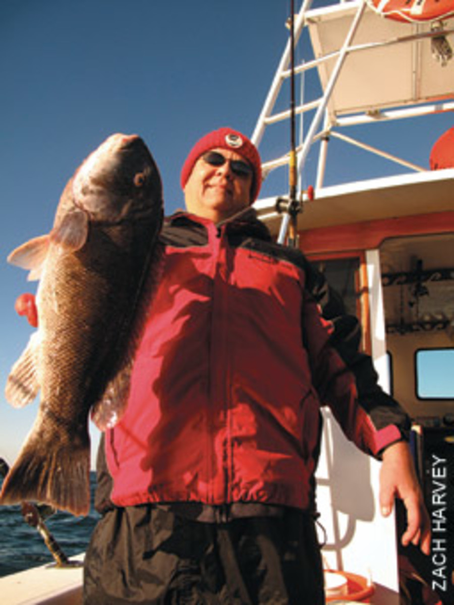 Fat tautog are as good a reason as any to try to salvage November fishing.