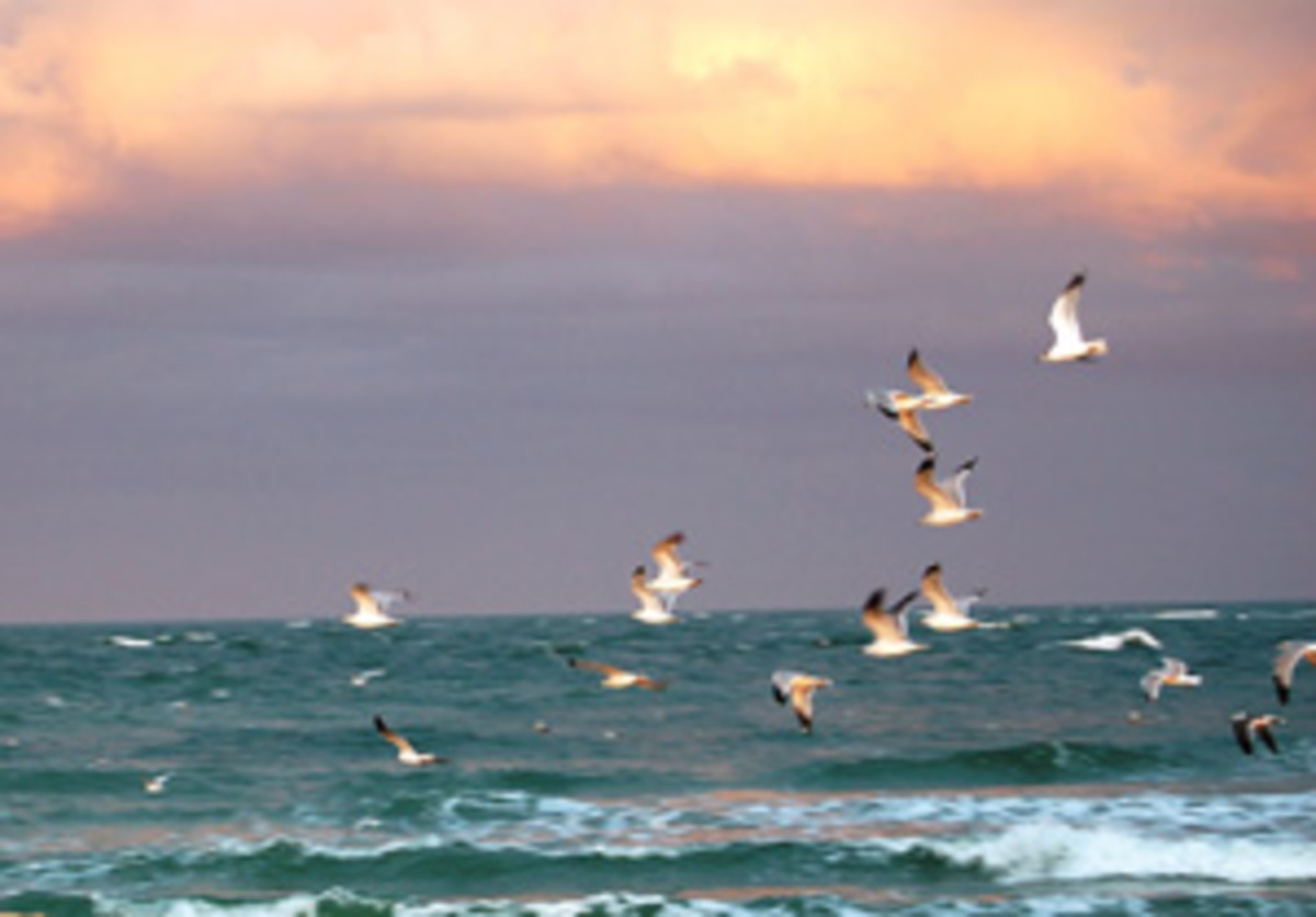 For anglers, the presence of birds can be a good or bad thing, depending on whether fish or pelicans are biting.