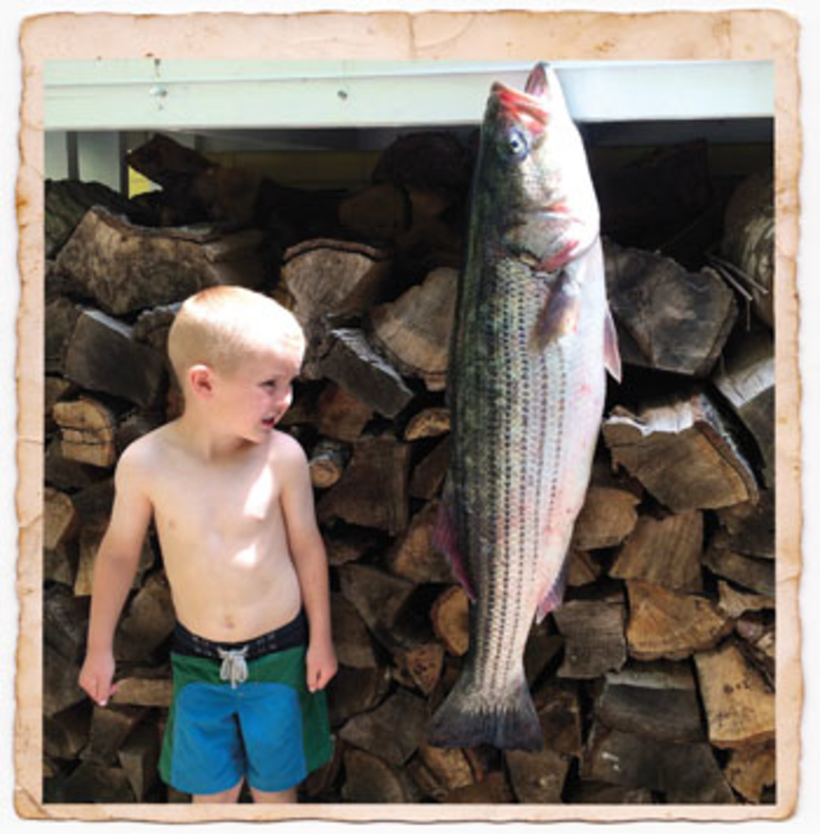 Joey Chivers sizes up a nice striped bass.