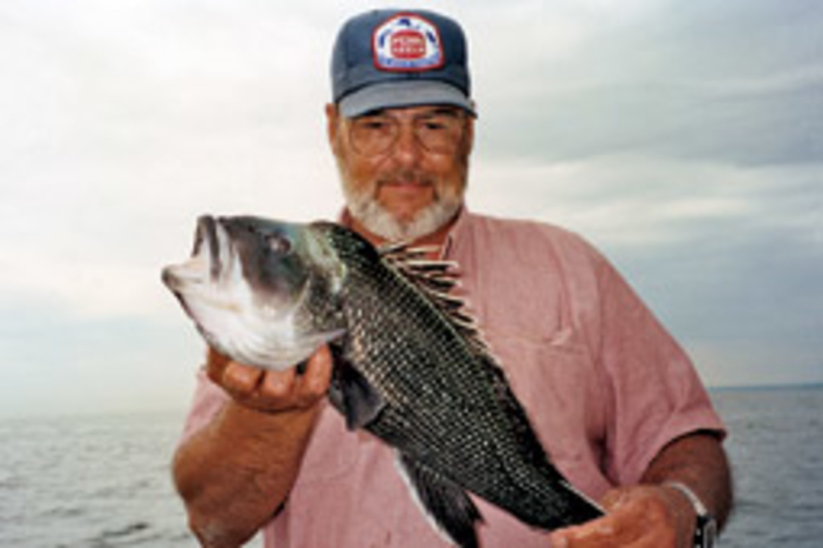 You can find sea bass of more than 5 pounds on some of the inshore spots.