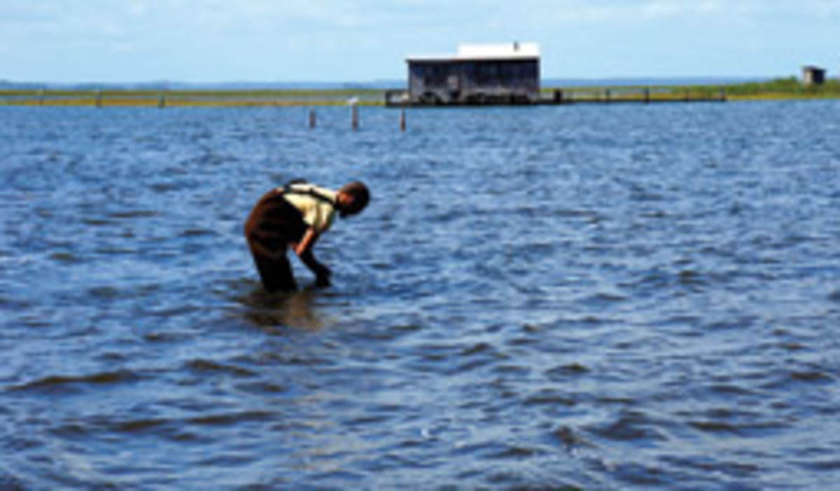 A waterman harvests Chincoteague Salts.