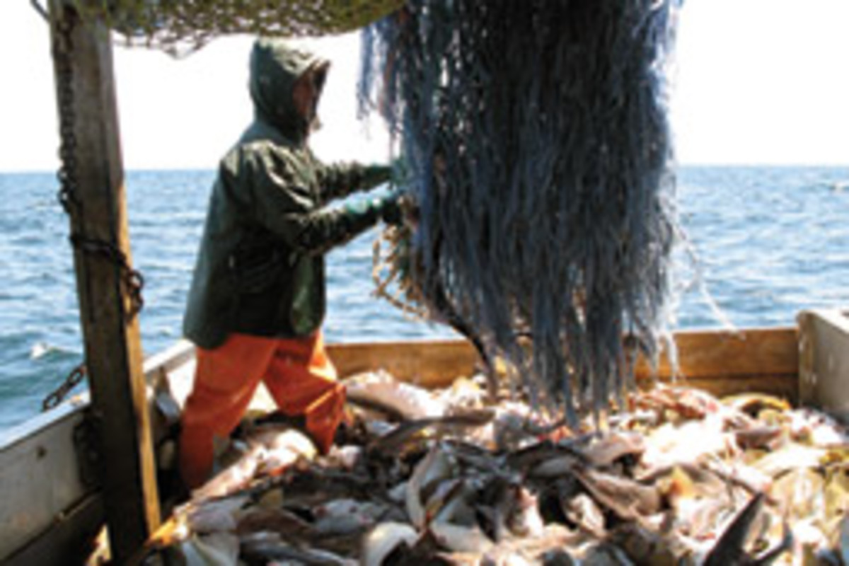 At nearly every turning point in 40 years of cod fishing, we've erred in the direction of fleet over fish.