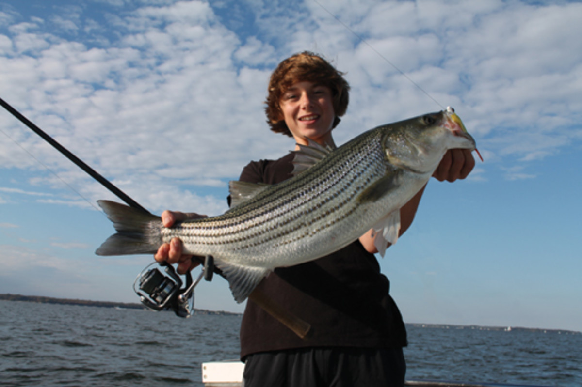 Larger striped bass often are found in deeper water during a fall blitz feeding frenzy.