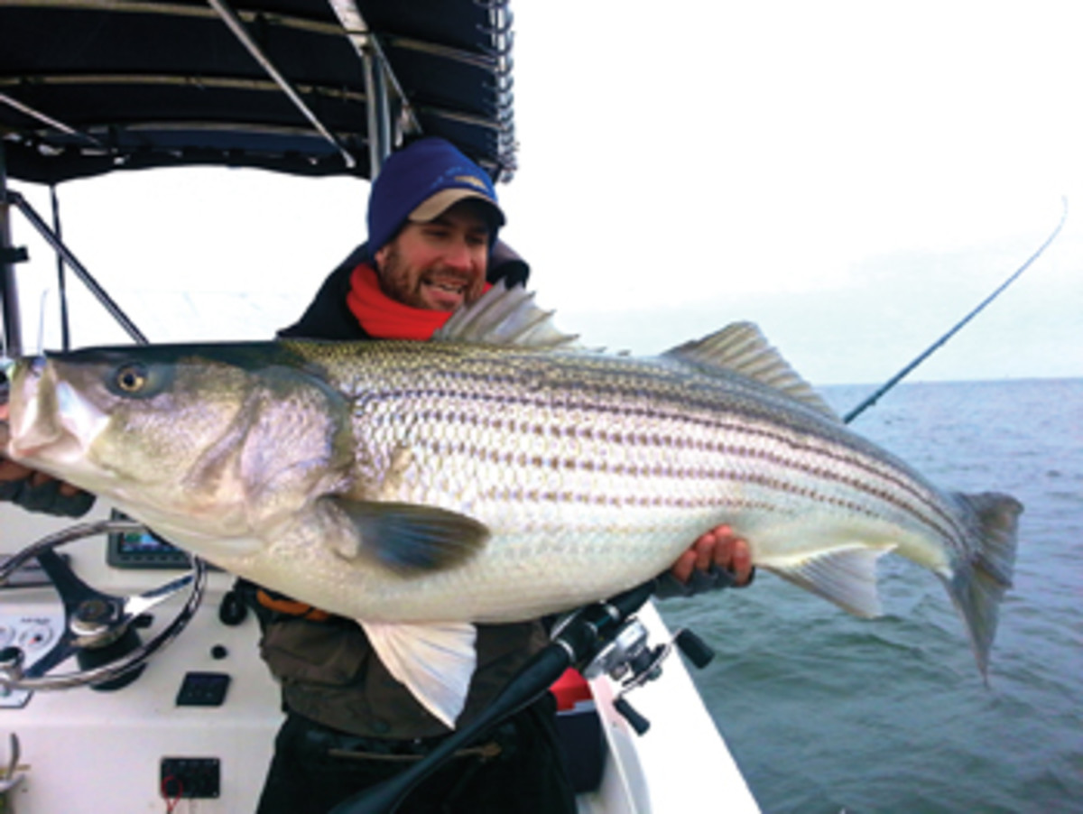 Rockfish rodeo stripers invade the chesapeake soundings for Striper fishing chesapeake bay