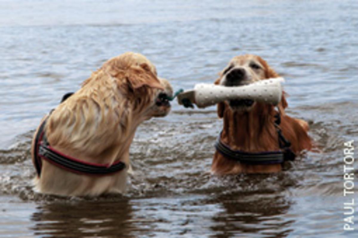 The 'crew' needs plenty of playtime ashore.