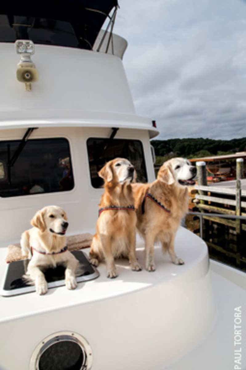 Home on the water: Tillie, Darby and Cruiser aboard Quest, a Nordic Tug 42.