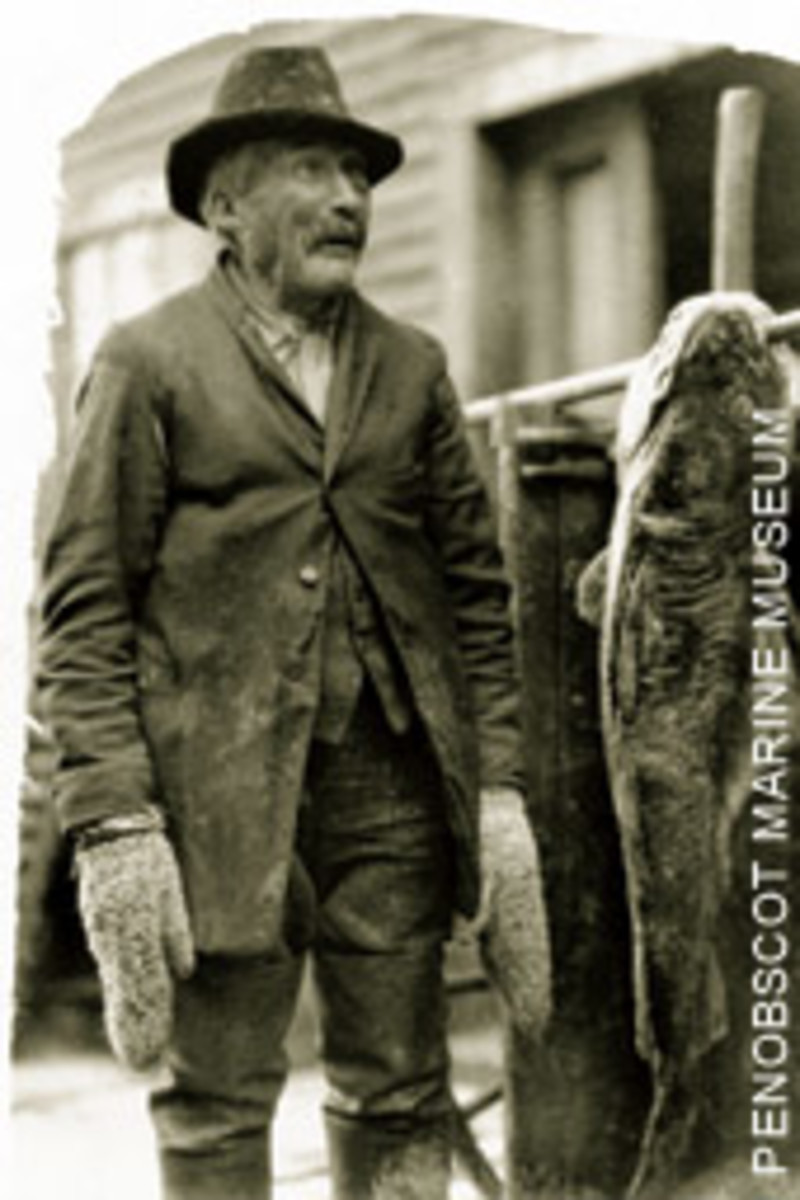 An old Maine gaffer and the fish that made him a living.