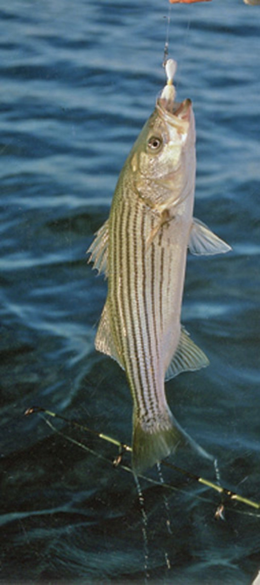 White bucktail is a great lure if you want to do a little more fishing while you're under way or on the hook.