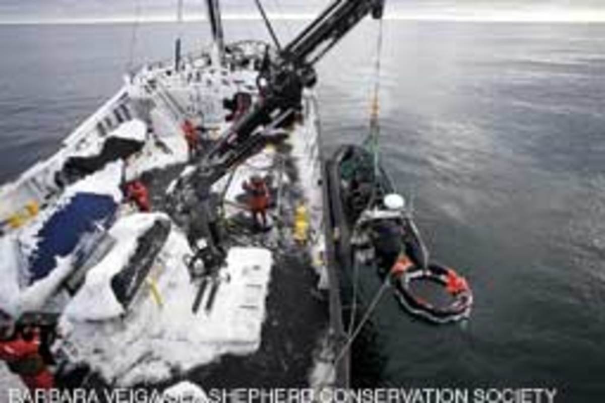 The crew of Sea Shepherd ship Steve Irwin found Berserk's life raft empty and its canopy torn off.