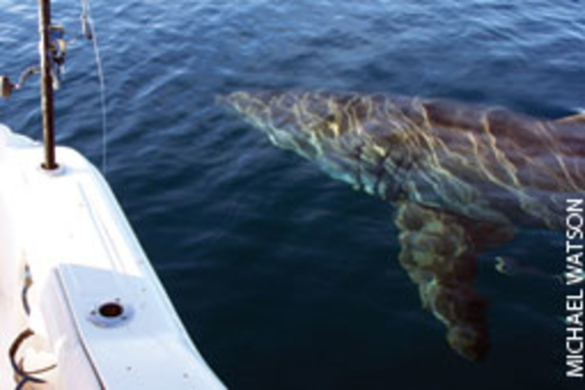 The shark made contact with the boat several times.