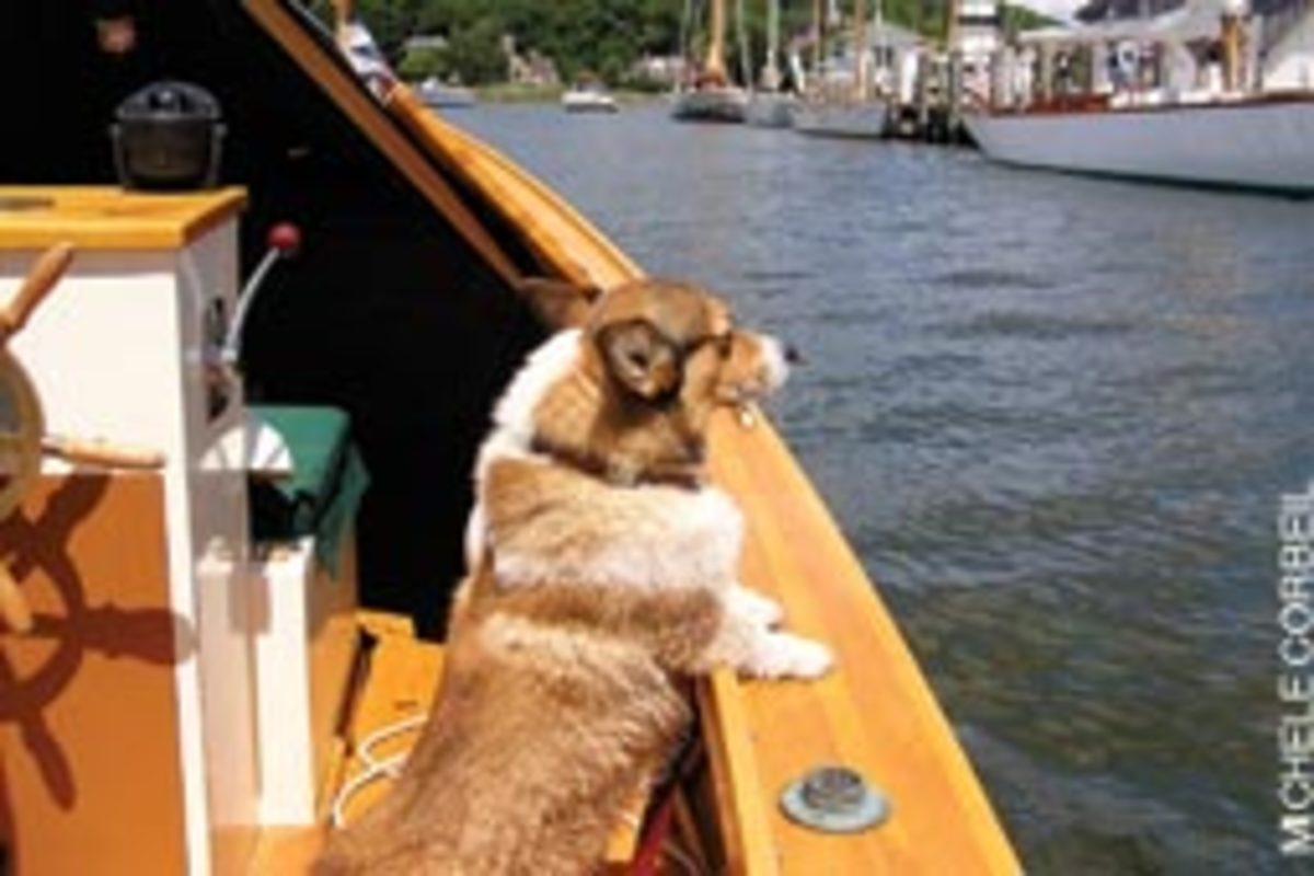 Michele Corbeil captured Dick Pulsifer's corgi Hudson taking in the sights at a WoodenBoat Show.