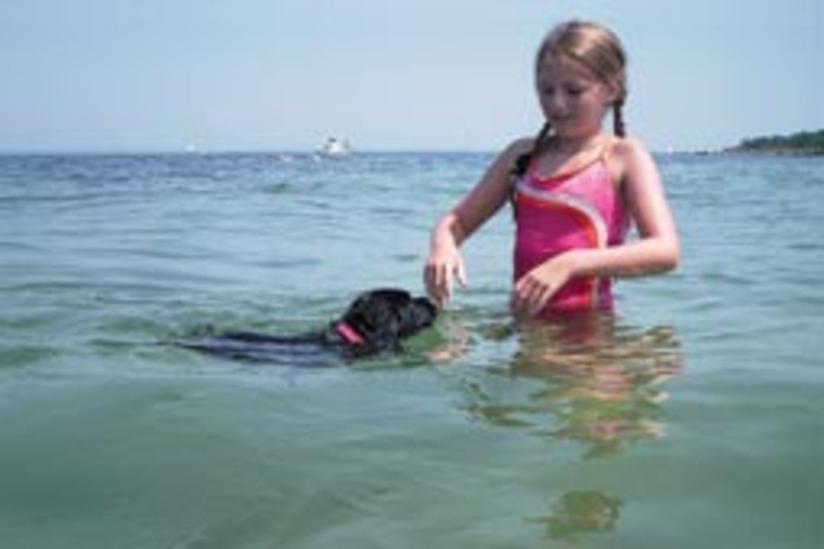 The Sisson family's Lab, Skipper, took to the water like most Labs do.