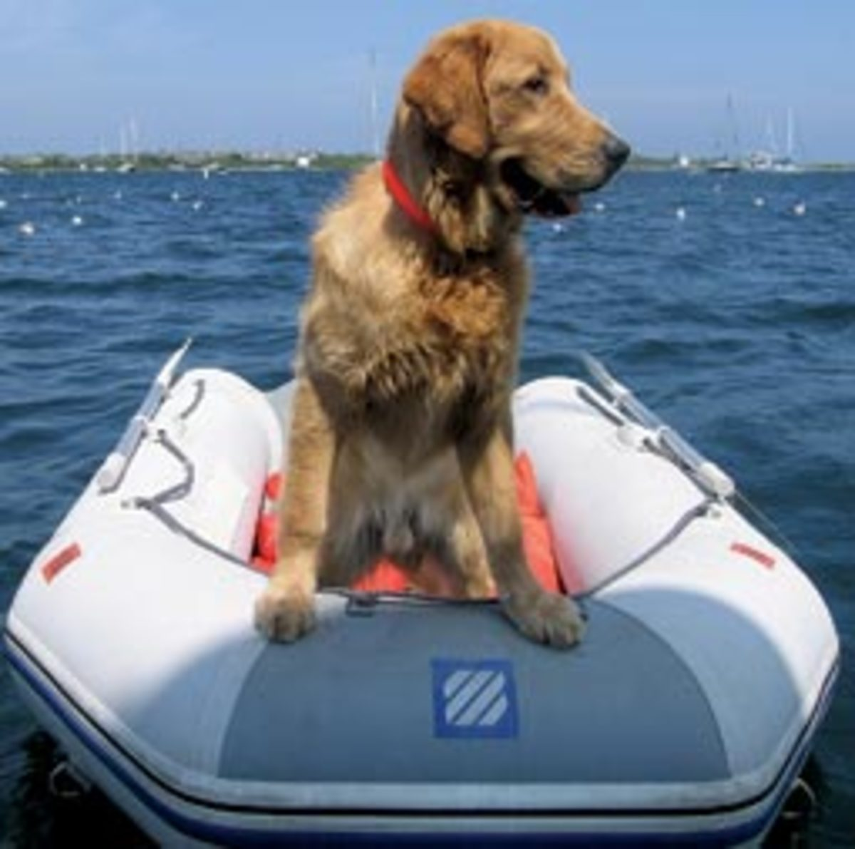 When not in the dinghy looking for birds, year-old golden retriever Duke can be found shark fishing aboard Amy Lynn Clark's 1987 Post 46 sportfisherman, Salty Paws, which inspired the name for our contest.