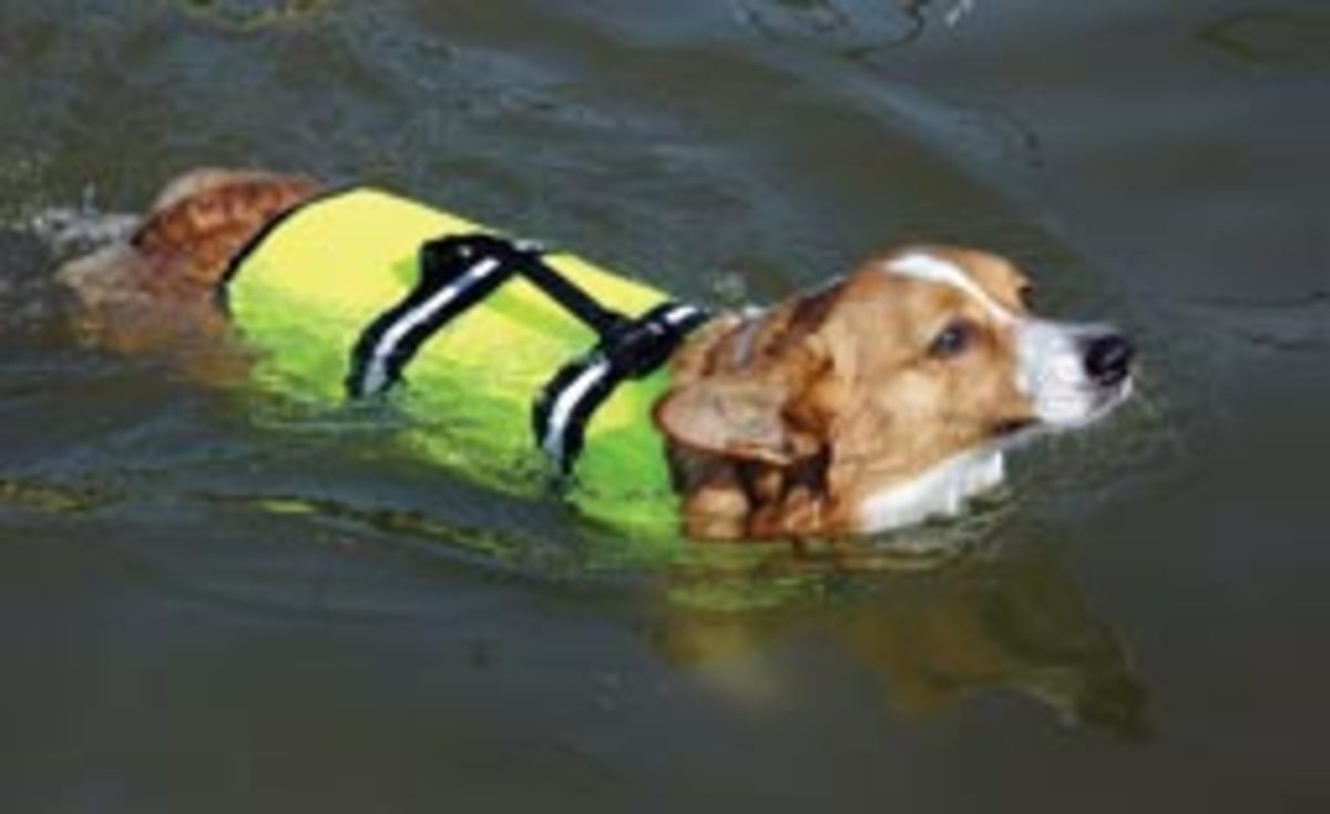 Paws Aboard's canine PFD
