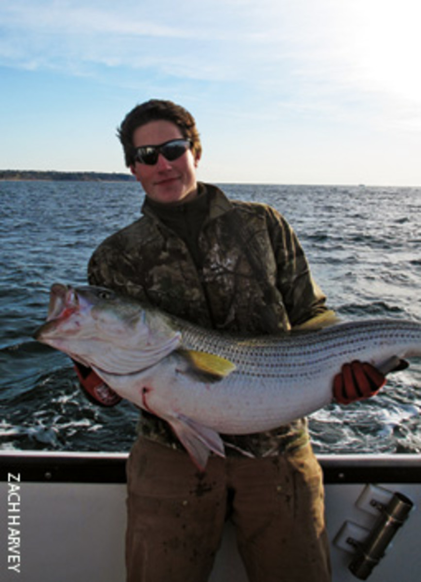 The fall herring run provides some of the last chances for stripers as they migrate for winter.