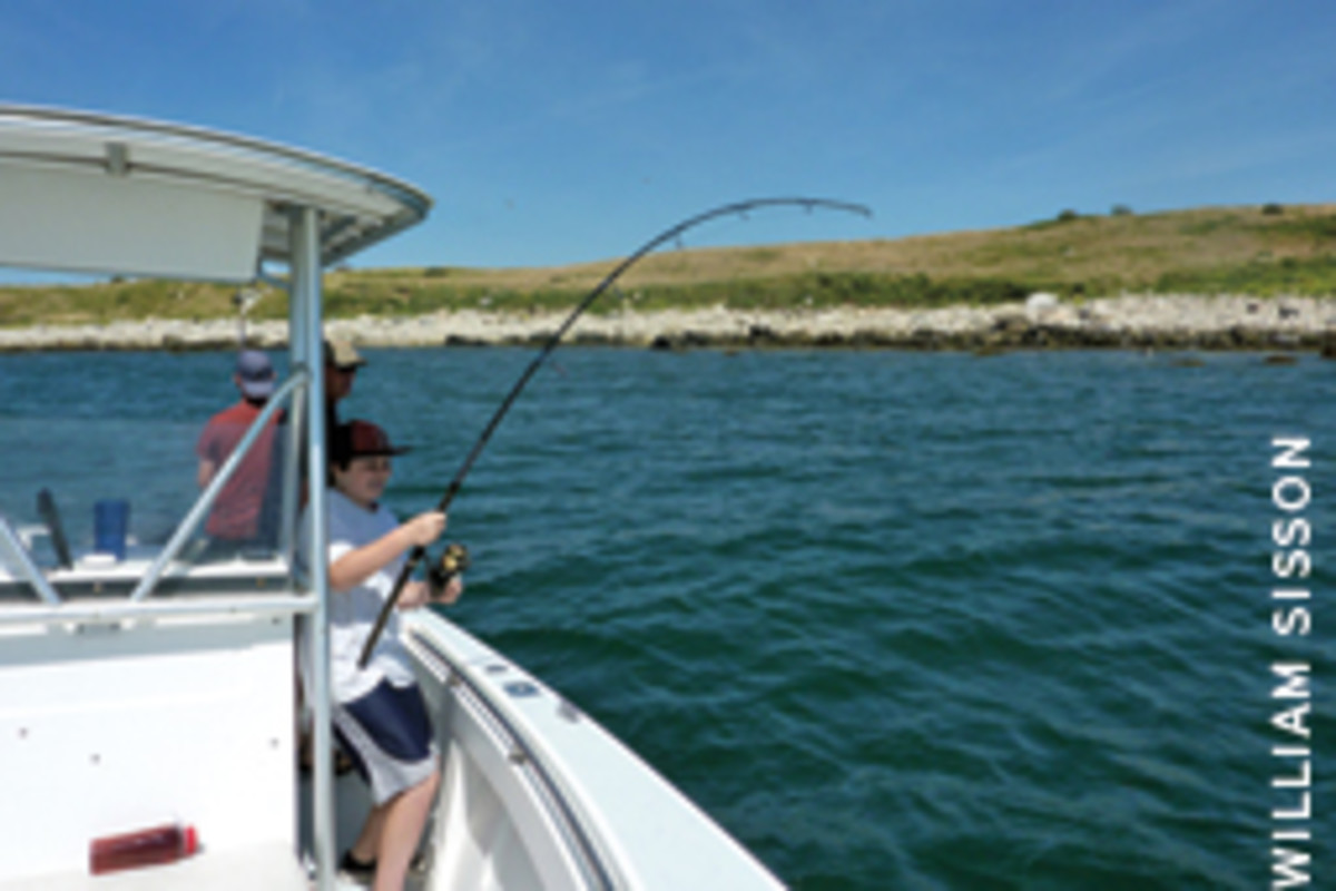 A bent rod on a sunny afternoon - classic summer.