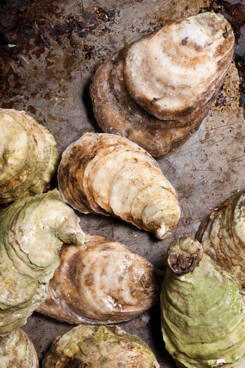 Oysters respond to sound, so how do noises in the ocean affect their life cycles?
