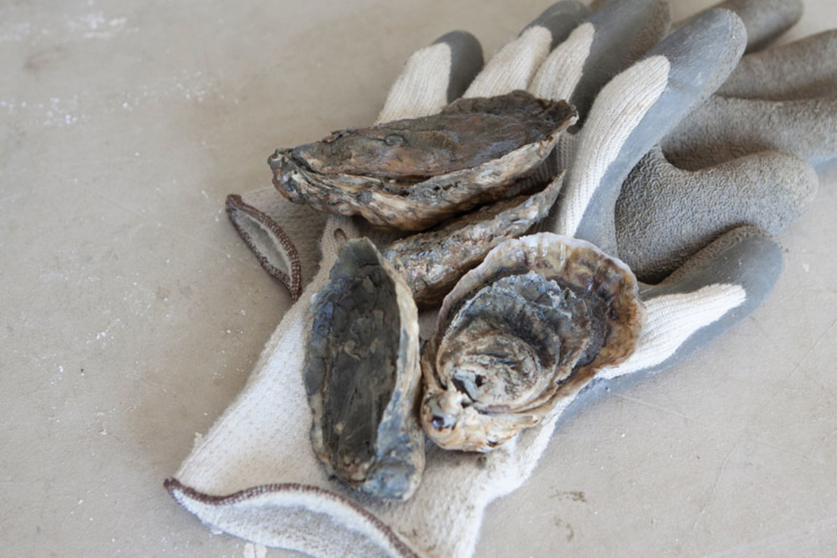 oysters-on-glove