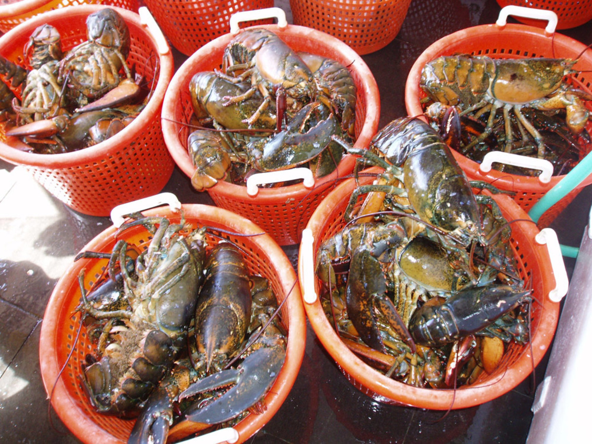 lobster4_fullsize