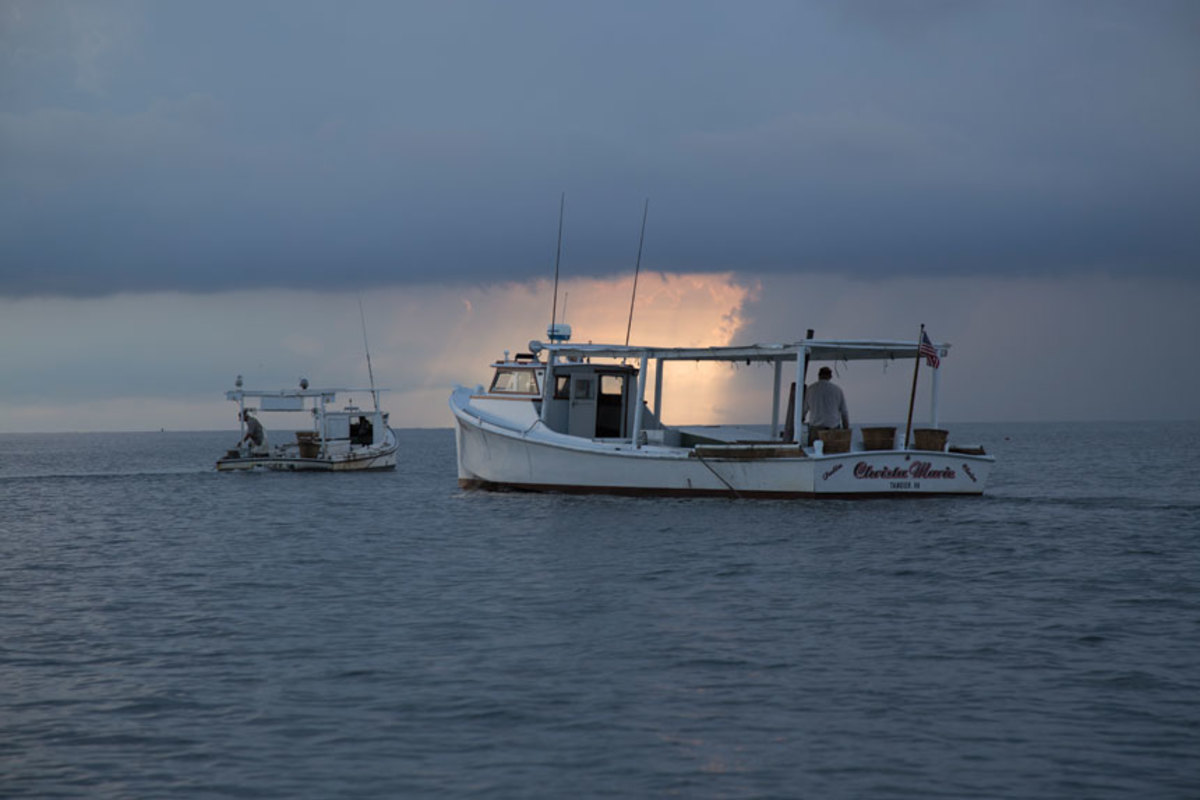 Two scrape boats work the grass flats off Tangier Island.