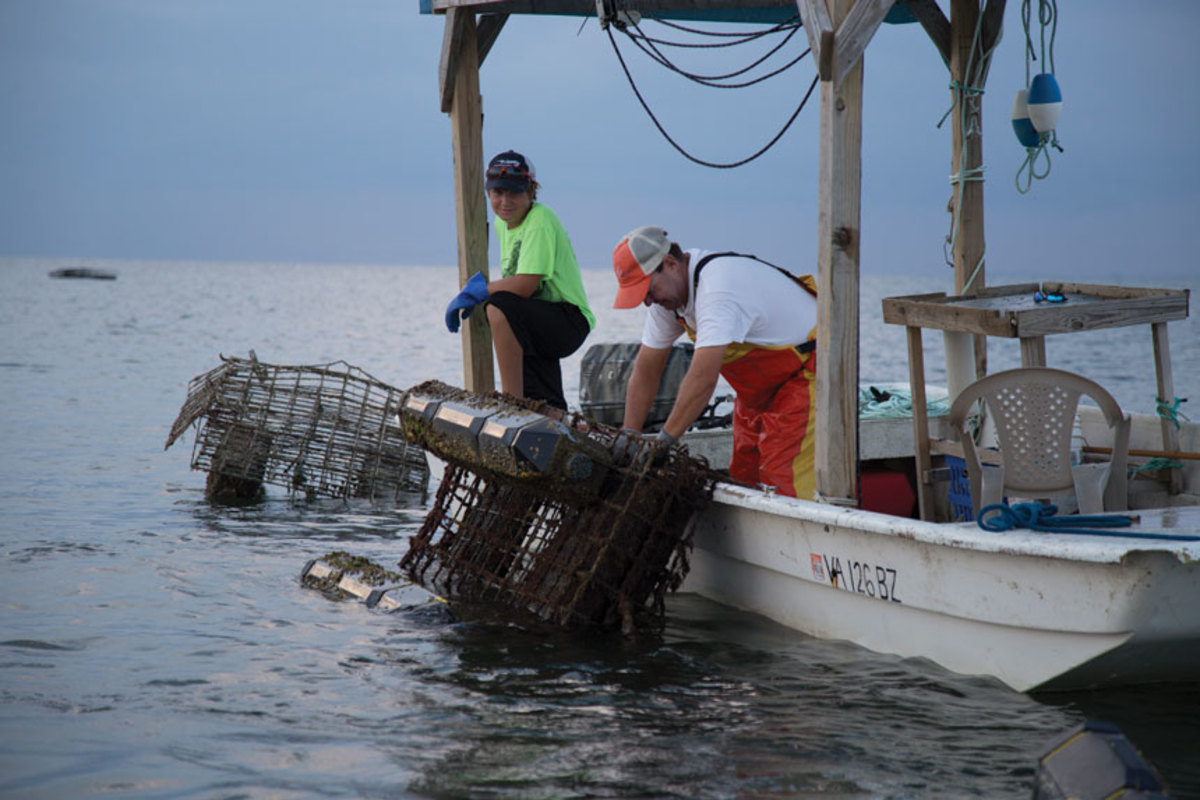 Sam Pruitt Parks, Tangier Island's youngest waterman, works an oyster aquaculture lease with fellow waterman Alan Parks.