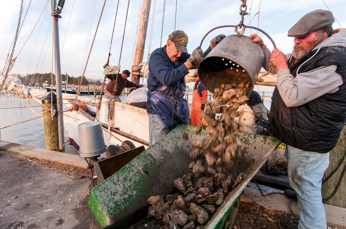 Seafood dealers buy oysters from skipjacks at the dock.