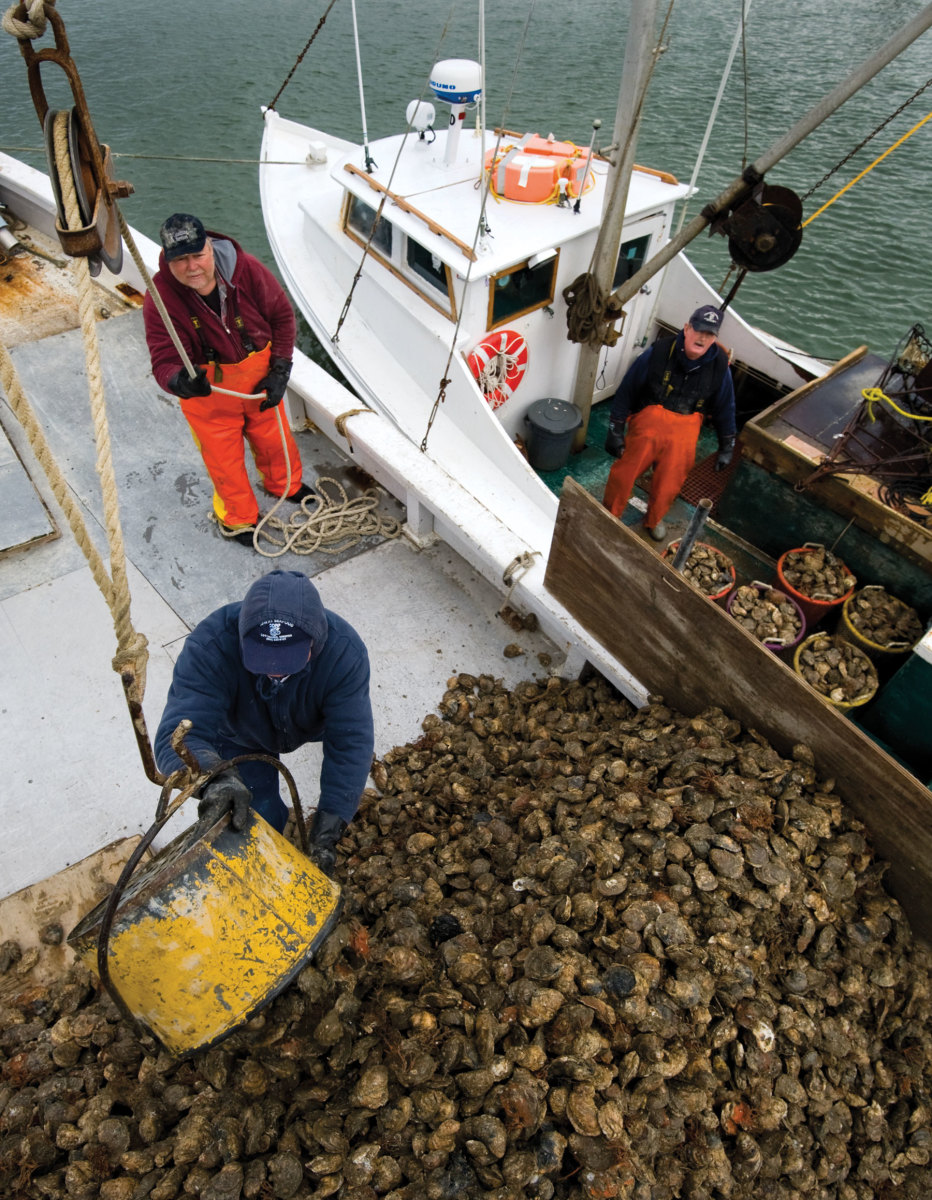Crewmembers load the Delvin K with oysters from workboats that power-dredge in Tangier Sound.