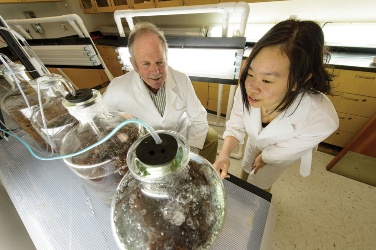 Yarish (left) sees potential uses for kelp beyond biofuels.