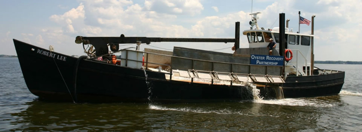 An Oyster Recovery Partnership vessel distributes spat-on-shell oysters on Chesapeake Bay.