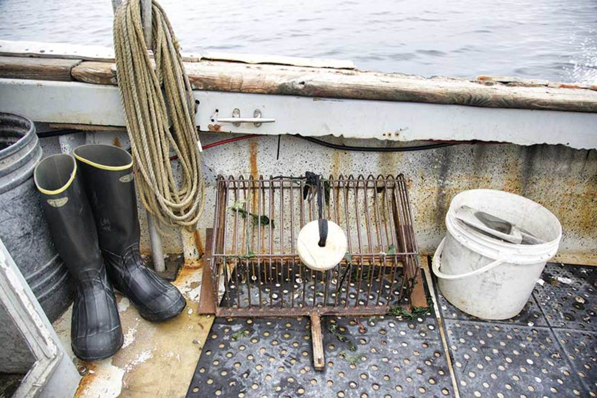 Brayton's boat carries metal rakes that get worked through the mud to uncover quahogs.