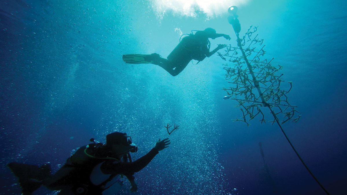 Force Blue puts former military divers to work on damaged coral reefs.