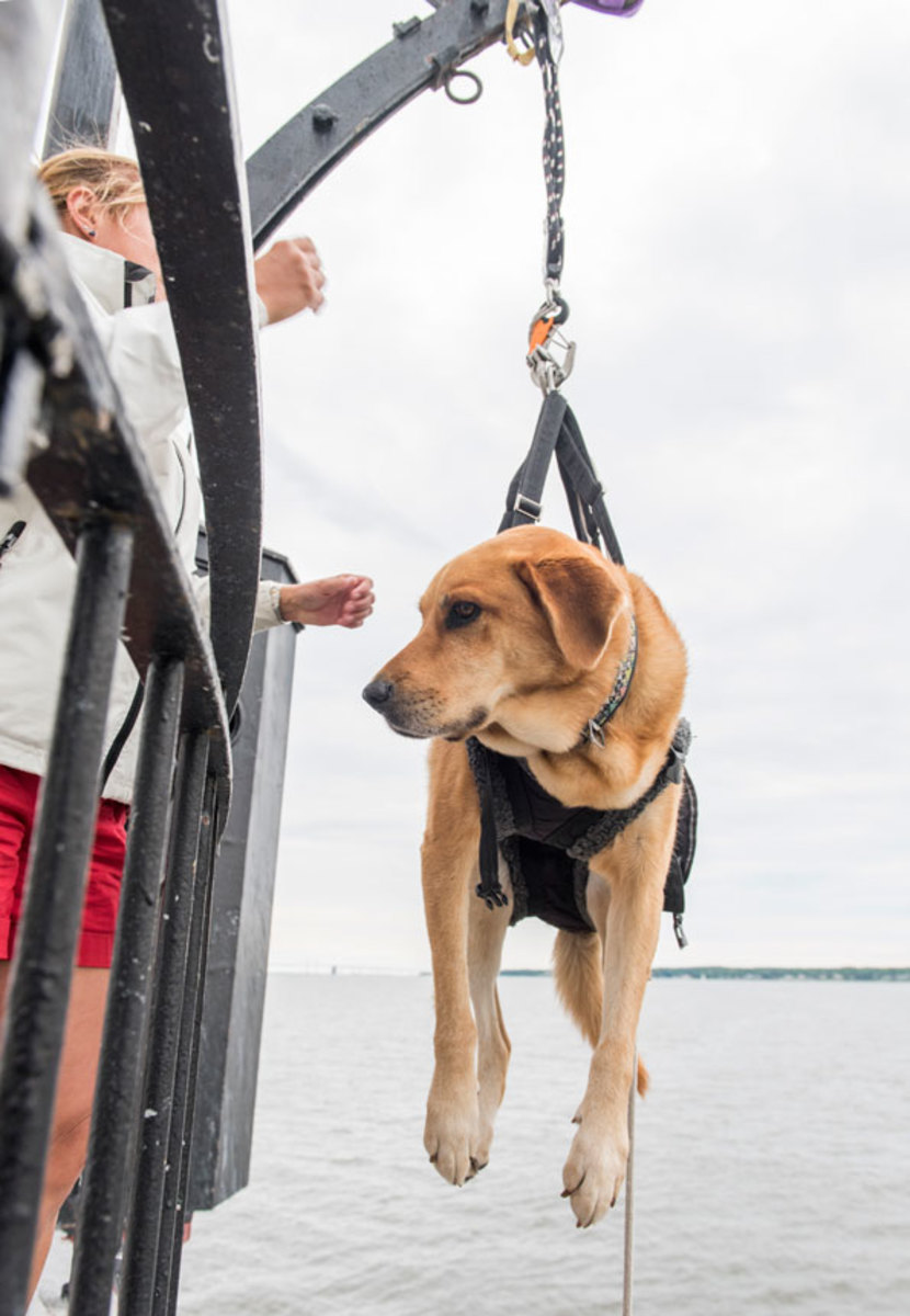 A pooch is hoisted to the landing platform.