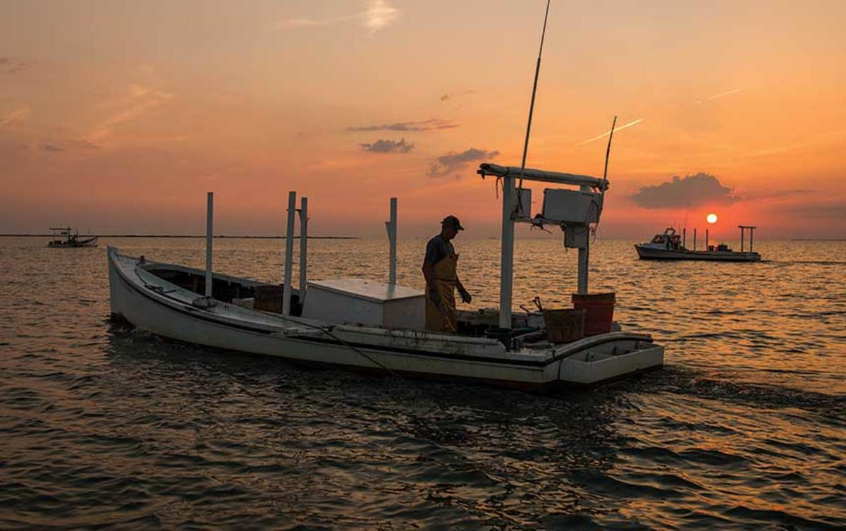 Smith Island fisherman scrapes for blue crabs in the shallow waters of Tangier Sound.