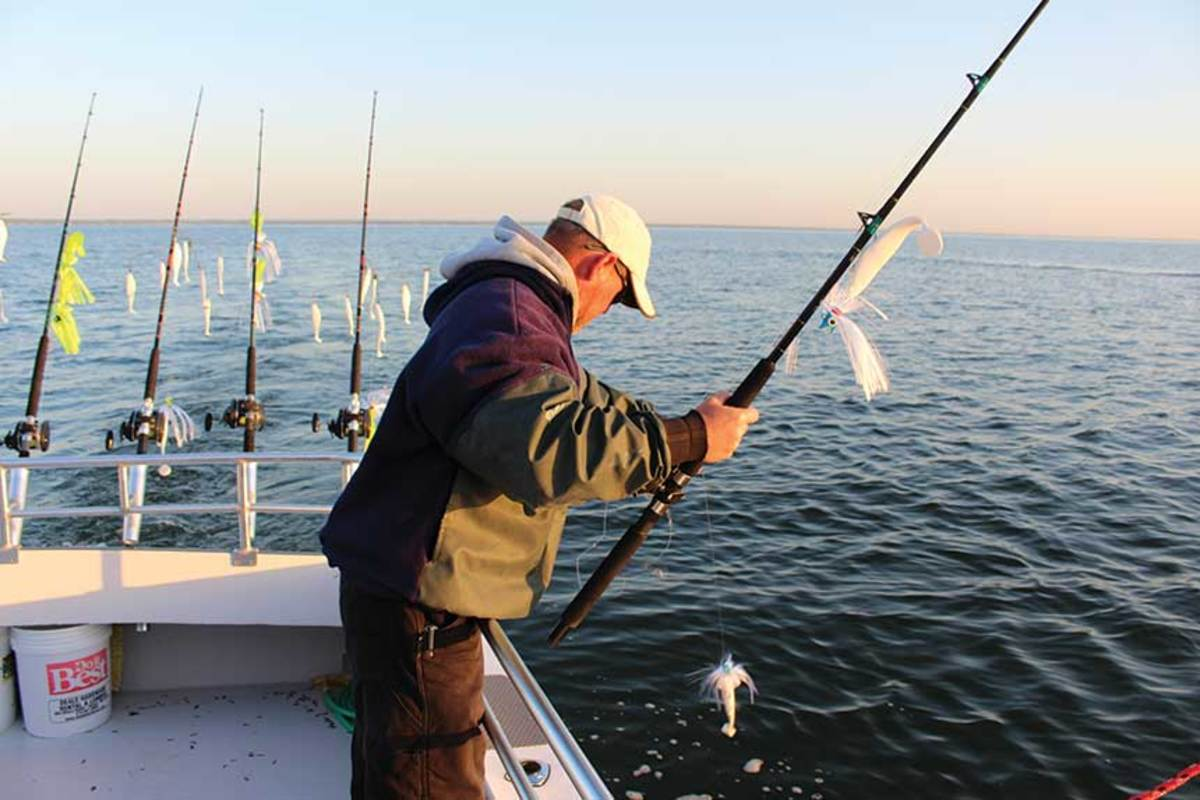To catch a striper's attention, set out lines with multiple offerings using umbrella rigs and tandems.